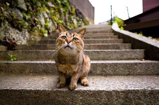 身近な猫 トラブル!野良猫がゴミを荒らすのを防ぐには?
