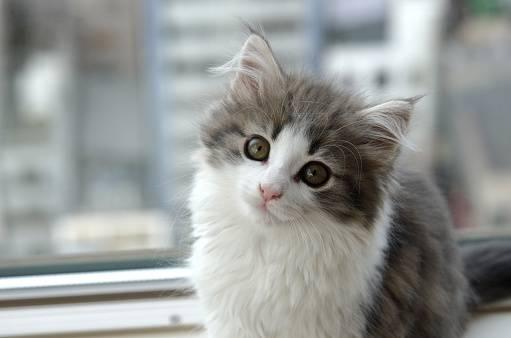 【猫のしつけ方としつけ教室】一緒に暮らすために必要です