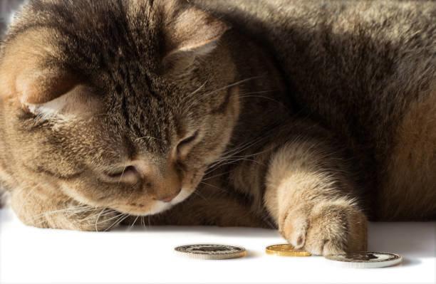 猫の保険料は高い方が安心?特徴や保険料を抑える方法を紹介