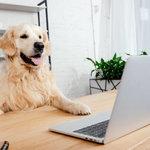 覚えておきたいペット保険の選び方のポイントと注意点