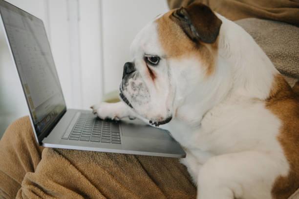 犬の保険の上手な選び方のポイント