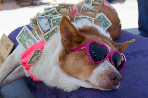 犬の保険料は高い?高い理由と安く抑える方法