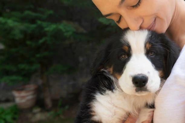 事前に確認!犬の保険の補償内容