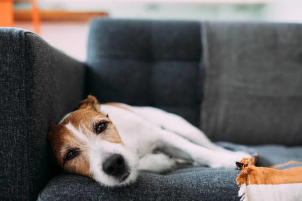 持病を克服した犬なら保険に入れることも!愛犬のためにできること