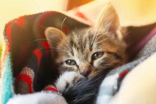 猫が病気になってからでは遅い?ペット保険と病気