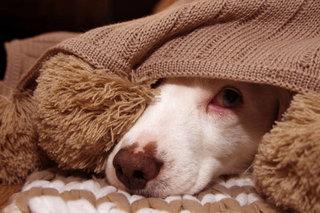 犬の保険と健康~病気になってからでは遅いのか~