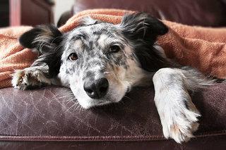 犬の補償内容は病歴で変わることも!病歴の考え方と向き合い方