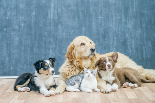 ペット保険の加入年齢と、歳が分からない場合の対応
