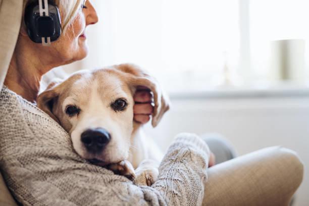 高齢(シニア)犬の保険加入で押さえたいポイント