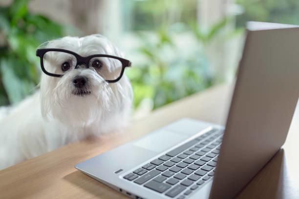 ペット保険の補償割合の基本と考え方
