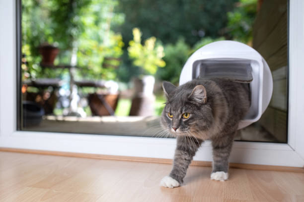 猫の保険の加入条件と気になる疑問
