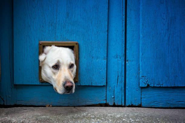 犬の保険の加入条件と注意点