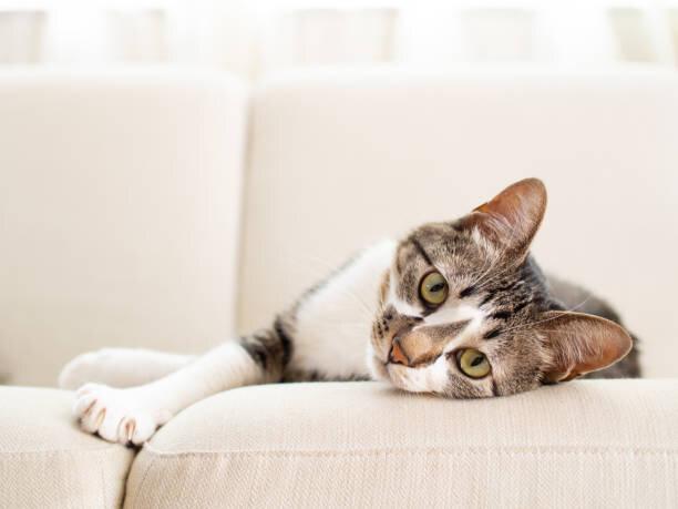 猫の腎臓病のサインとは?ケア方法と予防策