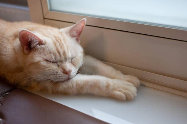 猫の尿路結石の症状と予防法