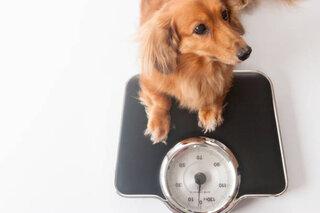 犬の肥満はどこから?ダイエットのポイントと病気の関係