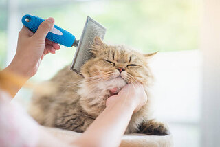 猫が毛玉を吐かない~受診の目安とケア方法~