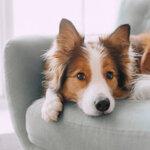 【原因別】犬の嘔吐症状と対処法~異物誤飲・中毒・病気~