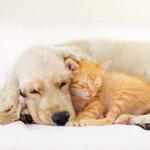 ペット保険を契約する必要があるのか?誤解される理由とペット保険の必要性