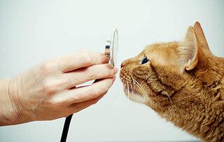 猫の保険で補償対象外となる病気と飼い主ができること