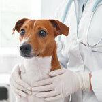 犬の保険で補償対象外となる内容と気を付けたいこと