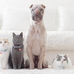 ペット保険は去勢や避妊も補償される?
