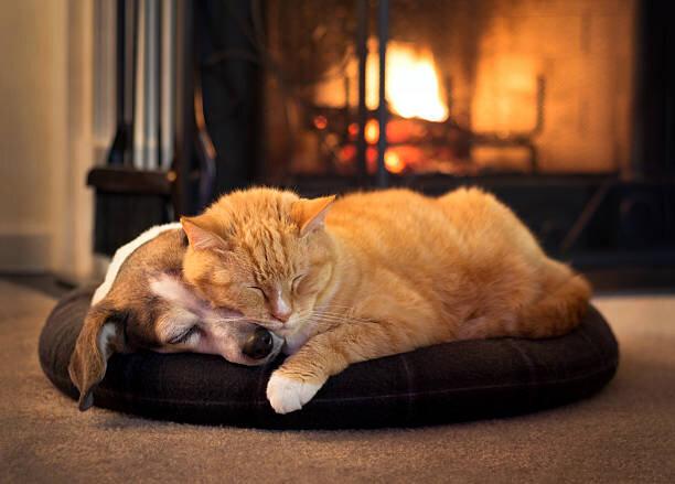 保護犬や保護猫でもペット保険に加入できる?里親が知っておくべきこと