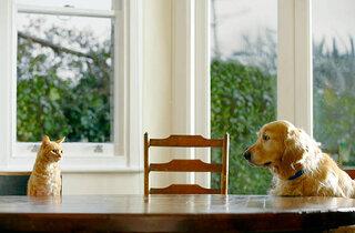 回数制限なしのペット保険 そのメリットと確認ポイント