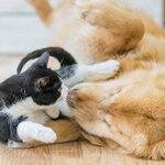 わかりやすいペット保険の請求方法
