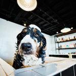 ペット保険の見直しと変更時の注意点
