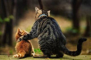 ペット保険の相談方法と選ぶ際の注意点