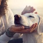 ペット保険は更新すべき?確認したいポイント