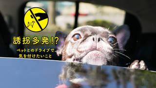車上荒らしでワンちゃんが誘拐された!? 車中でペットを待たせるときに気をつけたいこと