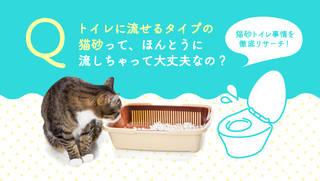 流せる猫砂もトイレに流しちゃダメってほんと?