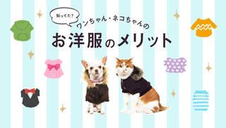 かわいいだけじゃない!ペットに服を着せることのメリット、こんなにある。