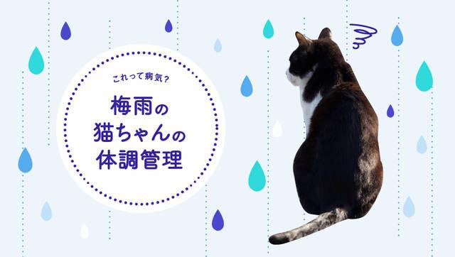 「うちの猫、最近元気がない…」それ、梅雨どきの気候が原因かも