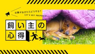 災害時に大切なペットを守るために、日頃から準備しておきたいこと