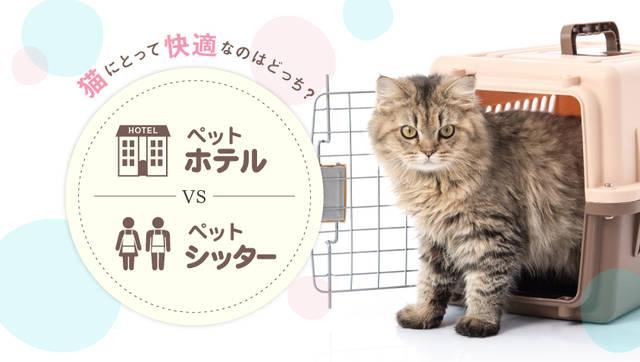 ペットホテルvsペットシッター。ネコちゃんのお世話を頼むならどっち?