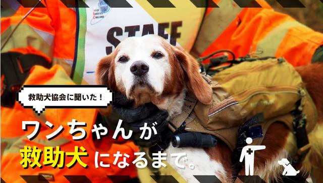 災害救助犬の活動は?どんな犬がなれるの?関係者に伺ってみました