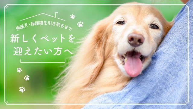 新しい家族として保護犬、保護猫を迎えるという選択肢