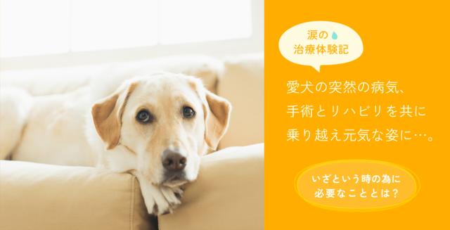 愛犬の突然の病気…いざという時の為に必要なこととは?
