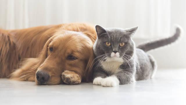 【必見】ペット保険のメリット・デメリットと加入までの流れ