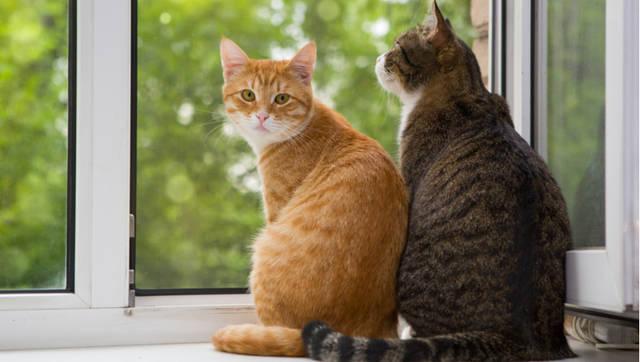 猫の保険で知りたいメリット・デメリット ~おすすめのポイントと注意点~