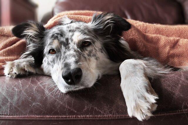 犬の風邪ってどんなもの?咳や鼻水には要注意