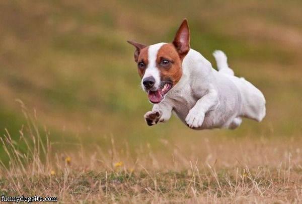 空飛ぶ犬!?表情豊かな犬の決定的な瞬間を捉えた写真8選!