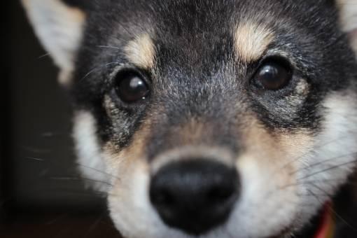 犬の癒しが欲しいあなたへ、「しゃべる」「育成する」おすすめなアプリを集めてみた!