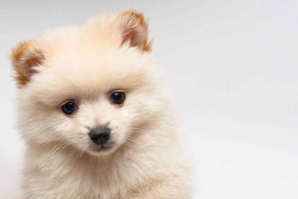 いつも一緒!!愛犬のカレンダーを作りたいならここ!!