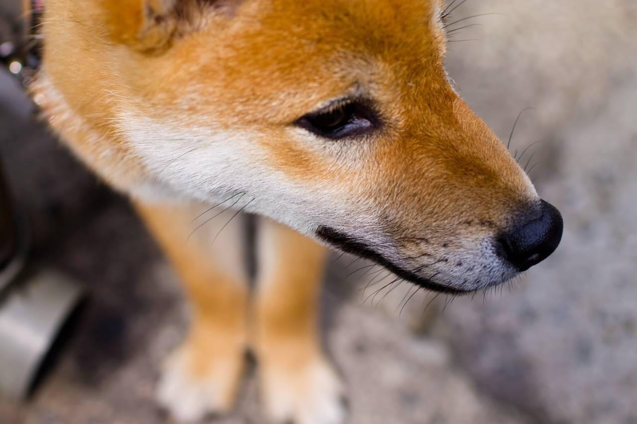 犬占いって知っていますか?星占いやペットの気持ちがわかる占いまで!