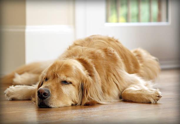 室内犬の転倒防止アイテムのご紹介