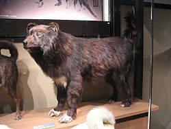 南極物語で有名な樺太犬とは??絶滅の噂や販売についてもご紹介!