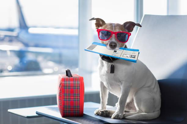 空港ターミナルにバカンスで犬